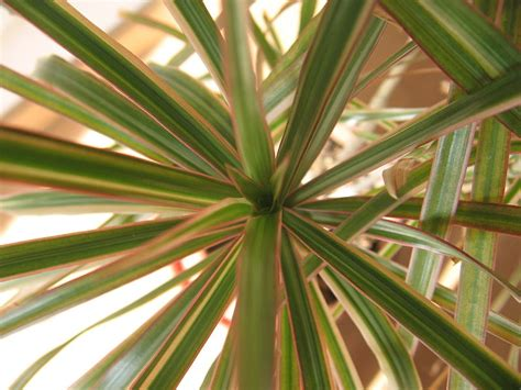 houseplants  purify  indoor air naturally