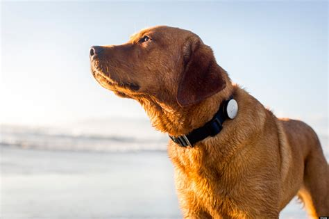 puppy whistle whistle collar lets you follow fido s every move