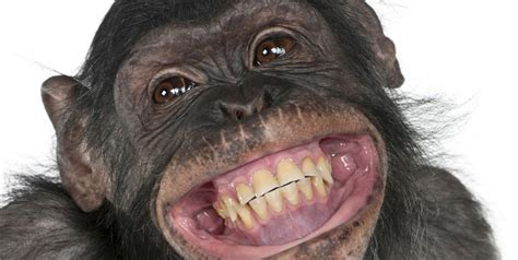 imagenes comicas de monos fotos de monos taringa