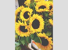 girasoles tumblr wallpaper - Buscar con Google | images ... I'm Lost