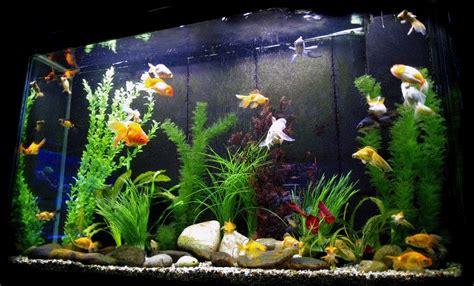 aquarium decorations  aquarium setup filtration