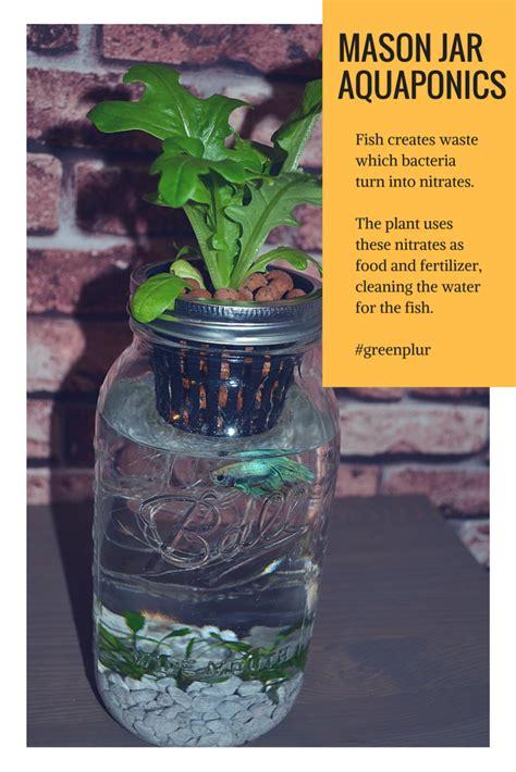 mason jar aquaponics works fish waste