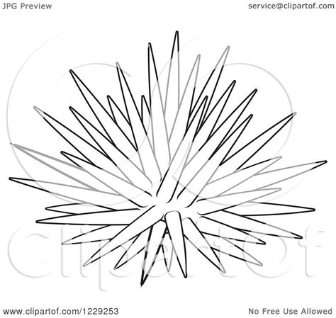 sea urchin colouring pages page 2