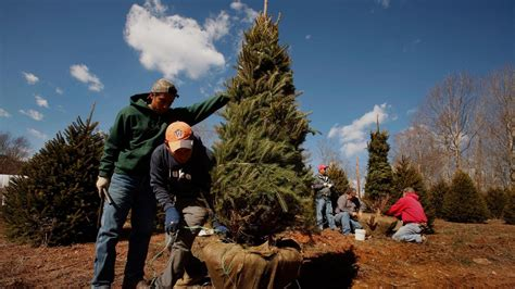 are real or artificial christmas trees better for the