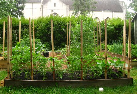 Tomato Growing Trellis trying out a new idea for tomato trellises regular midwesterners