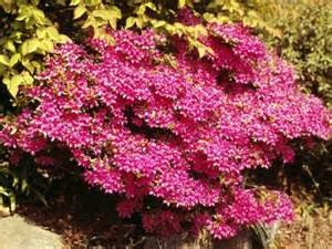 low flowering shrubs small flowering bushes ehow uk