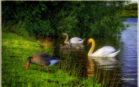 sfondilandia immagini  wallpaper natura paesaggi  animali