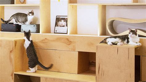 how to design the purrfect cat cafe how to design the purrfect cat cafe