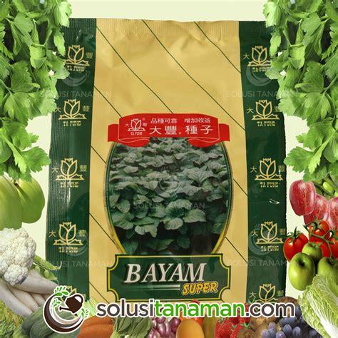 Benih Kangkung Daun Sempit Maryland 50 Gr home solusi tanaman