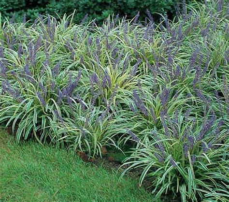shade tolerant deer resistant plants and shrubs