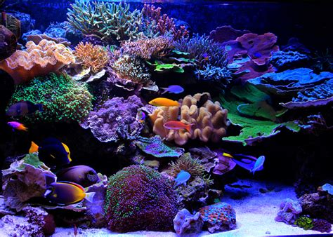 reef aquascape designs aesthetics of aquascaping part ii reefs com