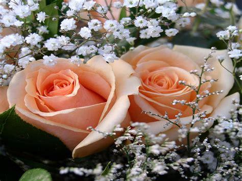 bunga mawar salem flora flower shop toko bunga jakarta warna bunga