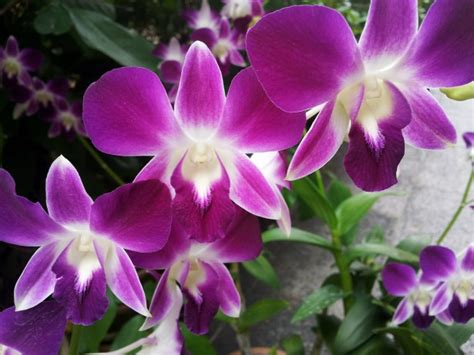 pink orchid flower blossom free stock photo public