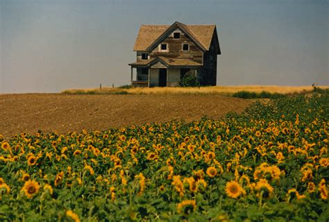 Field of sunflowers photo by roy luck on flickr newer older near the