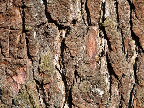 tree bark wallpapers amazing picture collection