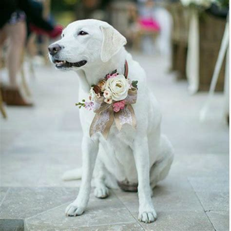 puppy wedding how to your pup to walk the aisle on your big day barkpost