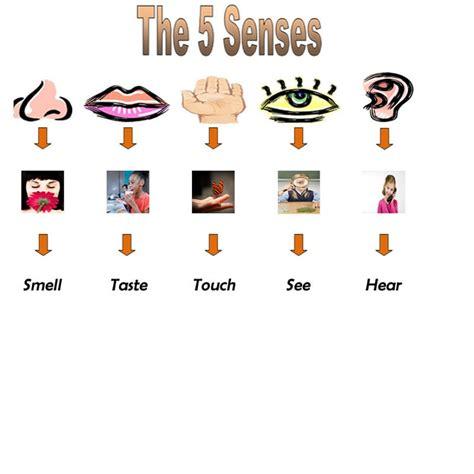 5 senses clipart free download clip art free clip art