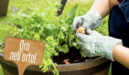 coltivare lo zafferano in vaso orto in vaso come coltivare lo zafferano sul balcone leitv