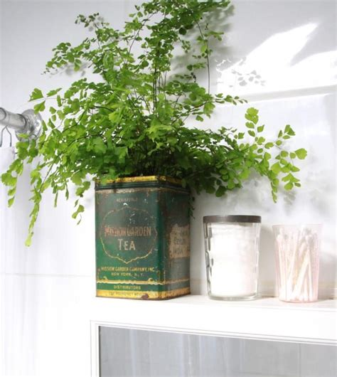 plants to keep in bathroom 25 best ideas about bathroom plants on pinterest plants