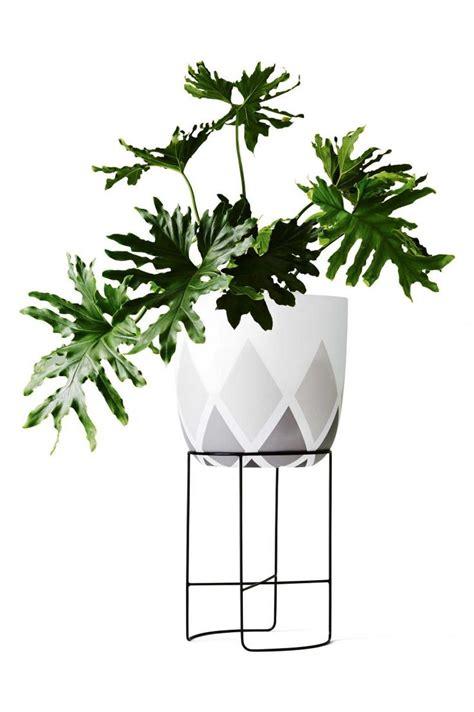 easiest indoor plants 100 easiest indoor plants the plant