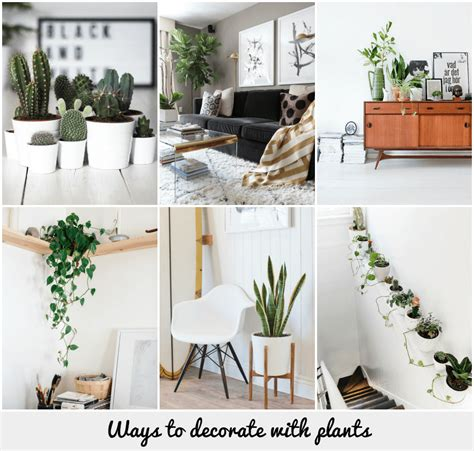 ways to decorate with plants chambers
