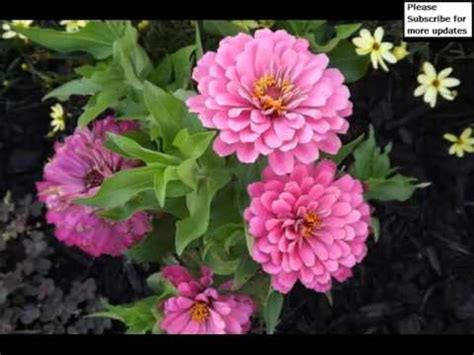 garden flowers pictures flowers  plants picture