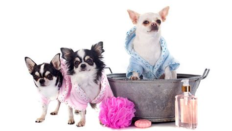 dogs grooming grooming and why you should do it regularly