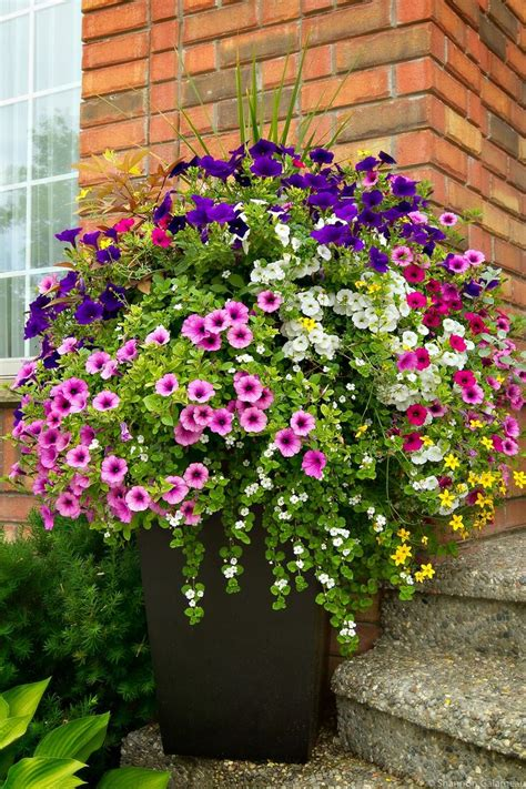 hanging container garden 1000 images about container gardening hanging baskets