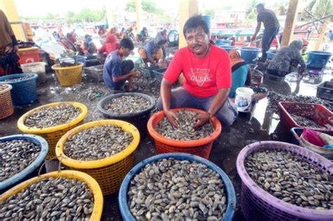 Kerang Di Malaysia ekonomi ih siput kerang serang kedah