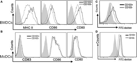frontiers regulatory dendritic cells there frontiers interleukin 4 inhibits regulatory t cell