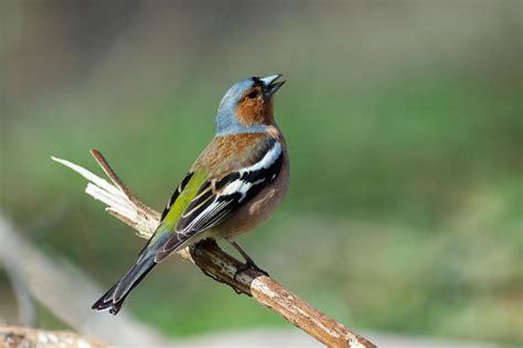 Kleine Vögel Im Garten v 246 gel im garten beobachten gartentechnik de