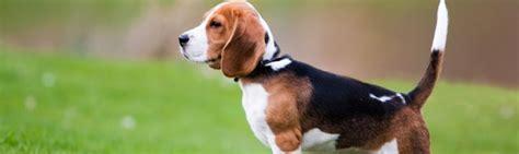 fotos de pitos de nios medianos perros medianos
