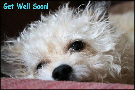 get well soon puppy get well soon by broadmeadow