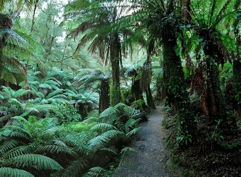 Who Are They Kidding Bulga by Bulga National Park Walk Active In Parks