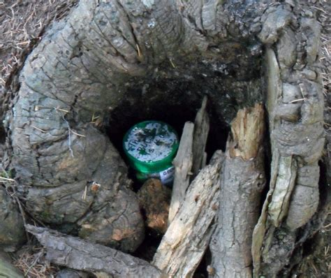 warewashing must be done in a 3 compartment sink file small geocache in a stump revealed jpg wikimedia