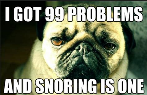 do all pugs snore all top snoring jokes on one page top snoring solution