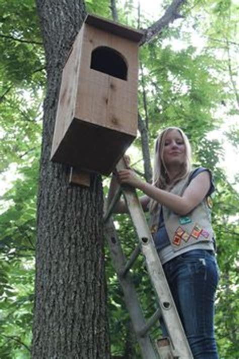 barred owl house plans bird bat house on pinterest owl house nest box and owl box