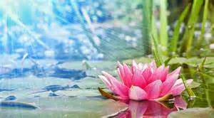 Lotus Meditation Zen Relaxation Backgrounds Relaxation Zen