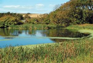 measuring your pond volume in gallons countryside network