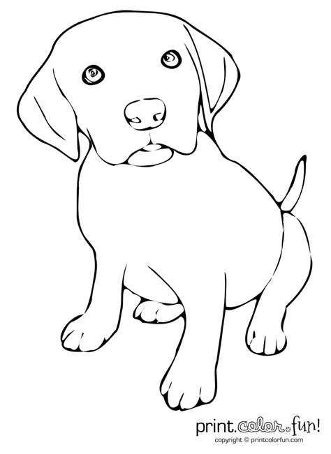 labrador puppy coloring page free coloring pages of a cute golden retriever