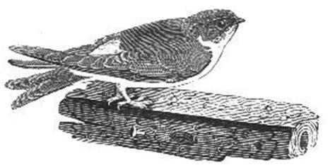 bird themes in macbeth macbeth navigator martlet