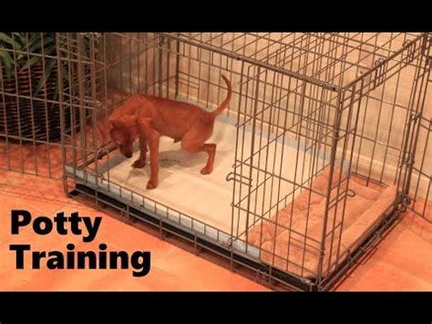 modern puppy apartment puppy apartment