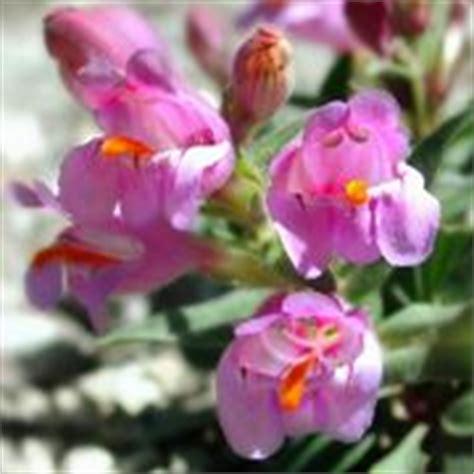 fiori artificiali sia piante e fiori artificiali piante finte piante e fiori