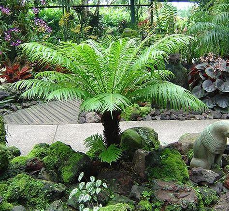 plants flowers ferns