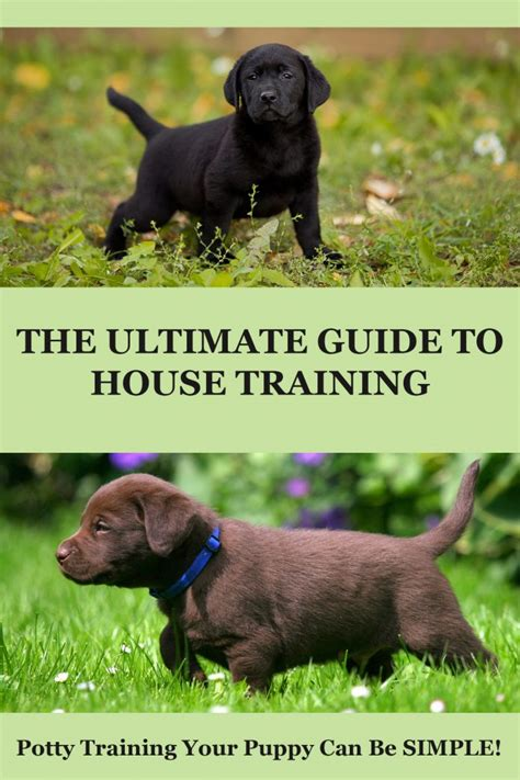 house training a puppy house training your labrador puppy