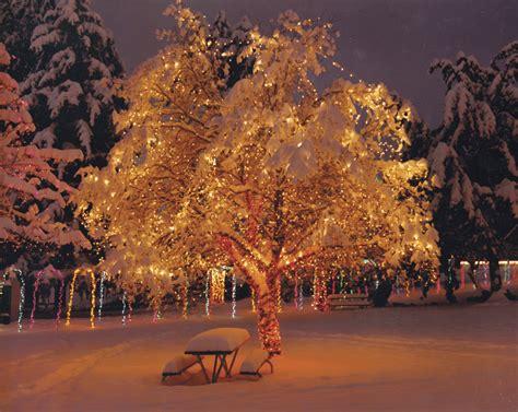 the trees in lights on photos from minnesoita