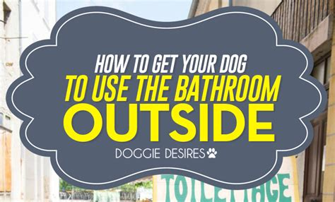 how to get your dog to use the bathroom outside how to get your dog to use the bathroom outside