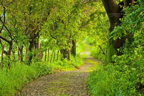 camino verde caminos verdes el color verde predomina en el paisaje