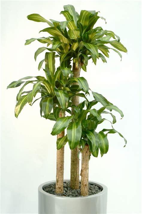 indoor plants that need light indoor plants that need light interior design ideas