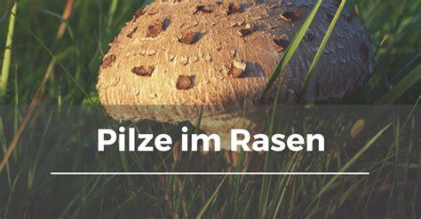 Pilze Im Gartenrasen by Pilze Im Rasen Garten Schule